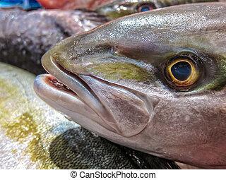 Fresh fish in a fish market.