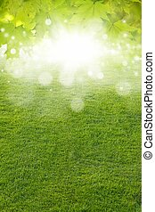Green leaves, green field, bright sun