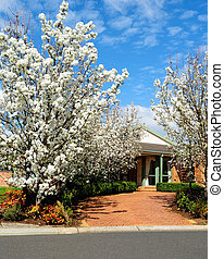 House with flowering trees - Alley of blooming trees to main...