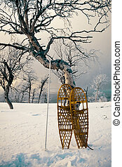 Snowshoes leaning against a tree - Yellow snowshoes leaning...