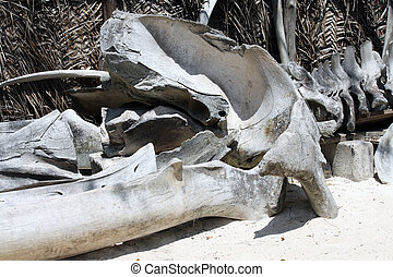 Bones of whale in Zanzibar - Bones of a beached whale in...