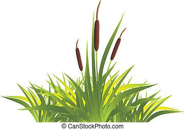 canne, herbe
