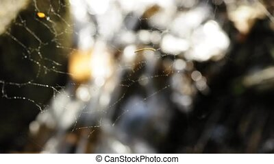 spider web with creek