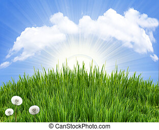Spring landscape with green grass and sun light