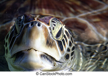 Sea Turtle Eyes and Face, Grand Cayman