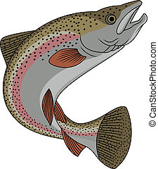 Trout fish  - Vector Illustration Of Trout fish