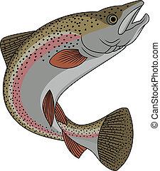 trucha, pez