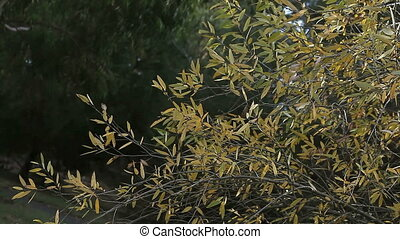 bush with yellow leaves
