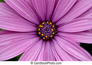 Beautifull purple flower