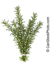 Bunch of Rosemary over White - Bunch of fresh rosemary,...