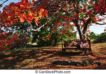 Nature Photos - Trees - A woman lay on a bench and holds an...