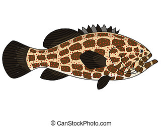 Grouper fish - Vector Illustration Of Grouper fish