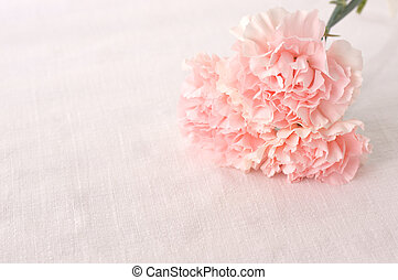 Carnation - pink carnation for mothers day...