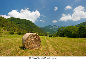 Round straw bales in French landscape