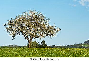 blooming fruit tree