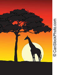 African Sunset background - Vector Illustration Of African...