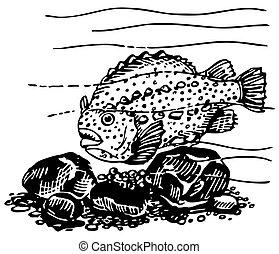 Lumpsucker - Fish Lumpsucker in the water
