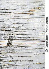 Birch bark texture close up