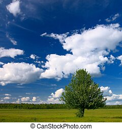 Lonely tree in rural landscape