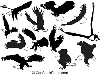 Eagles - Eagles in black white silhouettes