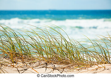 Green grass on sandy dune overlooking beach - Green grass on...