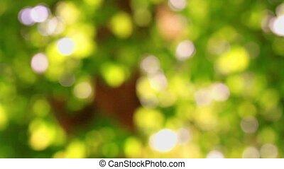 Beautiful green Bokeh