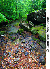 Tranquil Creek Scene in Alabama - Tranquil stream cuts a...