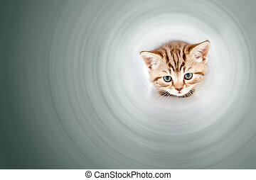 Funny kitten inside of pipe