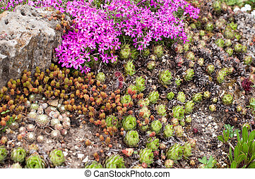 Rockery with different flowers in the garden in springtime
