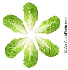 Cos Lettuce Leaves on White Background
