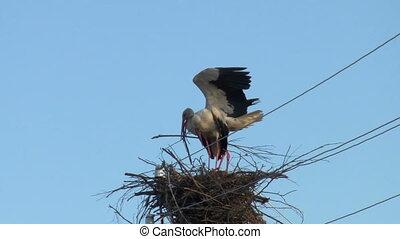 storks build a nest