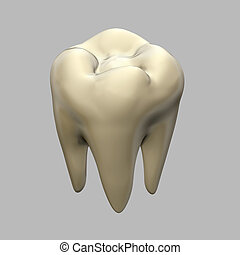 tooth isolated