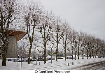 Snow-covered trees in winter in Grenoble University, France