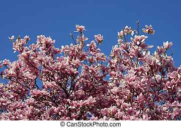 Spring pink flower with blue sky