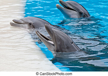 Bootle nose dolphins - a bootle nose dolphins head in blue...