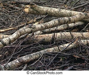 cut branches trunks - cut forest site details. tree branches...