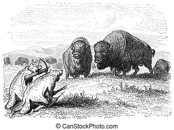 Buffalo Hunt - Native american buffalo hunters dressed as...