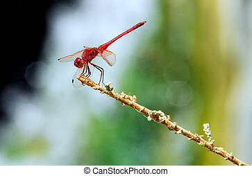 Wildlife Photos - Dragonfly - A dragonfly sites on a plat...