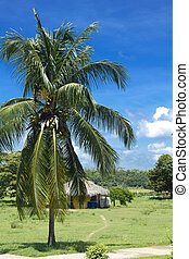 Hut and palm tree in Cienfuegos Caribbean zone Cuba