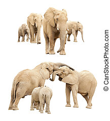 Family of Elephants Isolated - Set of Baby and Adult...