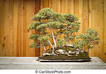 Elm Bonsai Tree Forest Against Wood Fence