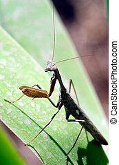 Wildlife Photos - Praying Mantis - Praying Mantis Insect in...