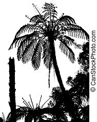 Fern tree silhouette, tropical bushes - Fern tree silhouette...
