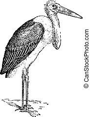 Marabou Stork or Leptoptilos crumeniferus, vintage engraving...