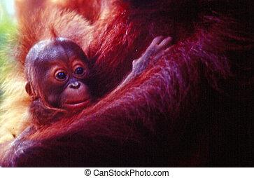 Wildlife Photos - Monkey