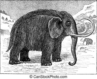 Mammoth or Mammuthus sp., vintage engraving - Mammoth or...