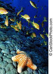 Wildlife Photos - Marine Life - A sea star lays on the...