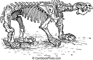 Megatheriid Ground Sloth or Megatherium sp., vintage...