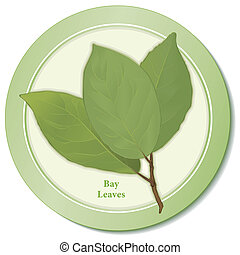 Bay Leaves Herb Icon - Bay leaves icon, aromatic perennial...