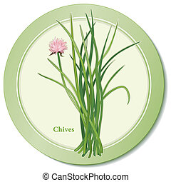 Chives Herb Icon - Chives icon, perennial herb, rose...